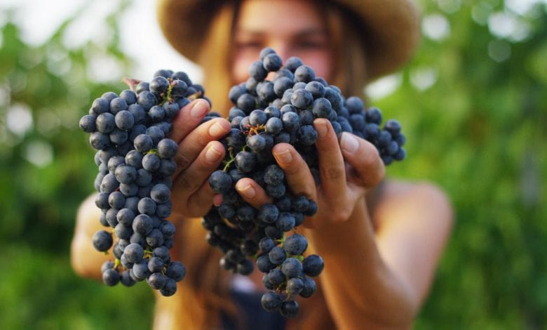 The Most Popular Types of Wine Grapes